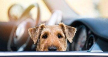 Hund-im-Auto-transportieren-main-picture