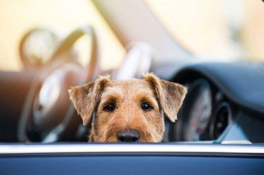 hunde sicher im auto transportieren garantiert sicher der ratgeber. Black Bedroom Furniture Sets. Home Design Ideas