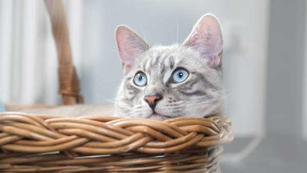 Katzenkörbe günstig online kaufen