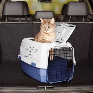 Die Katzenbox von Amazon eignet sich perfekt für den Transport.