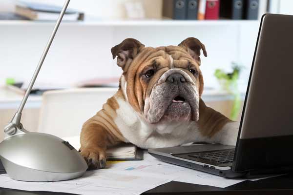 Hundeboxen günstig kaufen. Der Ratgeber.